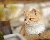 Yellow kitty — Stock Photo