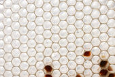 White honeycomb — Stock fotografie