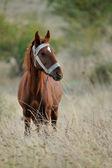 Inhemska häst — Stockfoto