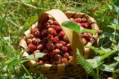 Wild strawberries in wooden basked — Stock Photo