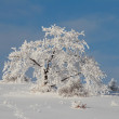 Frosen christmas tree scenery - Stock Photo
