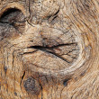 Oak wood texture — Stock Photo