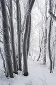 Bosque de invierno alimentos — Foto de Stock