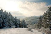 Winter mountain landscape with Christmas frozen pine-trees — Stock Photo