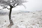 Winter scenery with three — Stock Photo