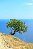 Tree on the bank — Stock Photo