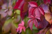 Colorful autumn leaves — Foto de Stock