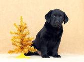 Filhote de labrador com árvore de natal — Foto Stock