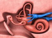 Inner ear — Stock Photo