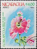 Stamp Nicaragua — Stock Photo