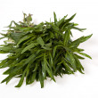 Thyme bunch on white bacground — Stock Photo