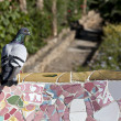 Pigeon on Tiles of Parc Guell — Stock Photo #9936285