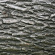 Royalty-Free Stock Photo: Bark of tree
