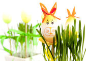 Easter bunny eggs — Stockfoto