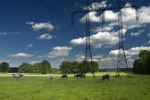 Panorama of horses with Electrical tower — Stock Photo