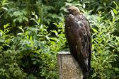 Predator in the nature — Stock Photo