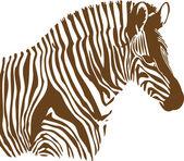 Brown and white Zebra on white background — Stock Photo