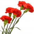 Bouquet of five red carnations — Stock Photo