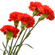 Stock Photo: Bouquet of five red carnations