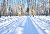 Winter Forest in clear day — Stock Photo