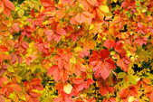 Leaves background — Stock Photo
