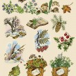 Forest set of natural images - Zdjęcie stockowe