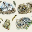 Nestlings, birds and feathers — Stock Photo