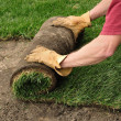Unrolling Sod — Stock Photo