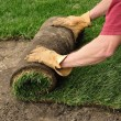 Unrolling Sod — Stock Photo #9133694
