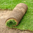 Stock Photo: Unrolling Sod
