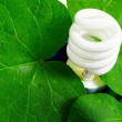 Compact fluorescent light bulb and green leaves — Stock Photo
