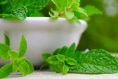 Mint and oregano — Stock Photo