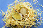Euro coins in a nest — Stock Photo