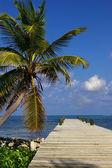 Belize, Central America — Stock Photo