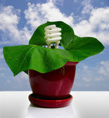 Compact fluorescent bulb and a plant — Stock Photo