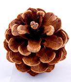 Pine Cone from above — Stock Photo