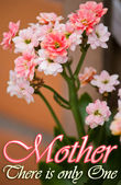 Mother's Day Celebration Card — Stock Photo