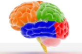 Colorful Brain — Stock Photo