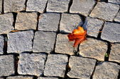 LEAVE ON PAVE — Stock Photo
