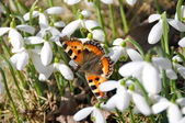 SPRING BUTTERFLY — Stock Photo