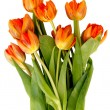Stock Photo: Bouquet of ginger tulips isolated on white background.