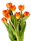 Bouquet of ginger tulips isolated on white background. — Stock Photo