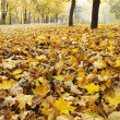 Stock Photo: Autumn at the park