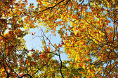 Top of autumn trees — Stock Photo