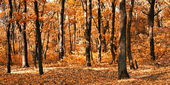 Autumn at the forest — Stock Photo