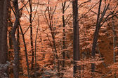 Red fall colors forest — Stock Photo