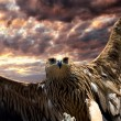 Flying eagle — Stock Photo