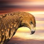Hawk portrait — Stock Photo