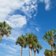 Stock Photo: Palm trees over blue sky