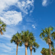 Palm trees over blue sky — Stock Photo
